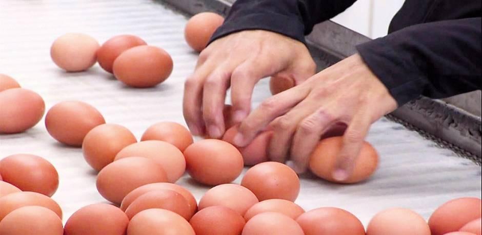 Le Maroc a produit plus de 6,6 milliards d'œufs en 2018 (ANPO)