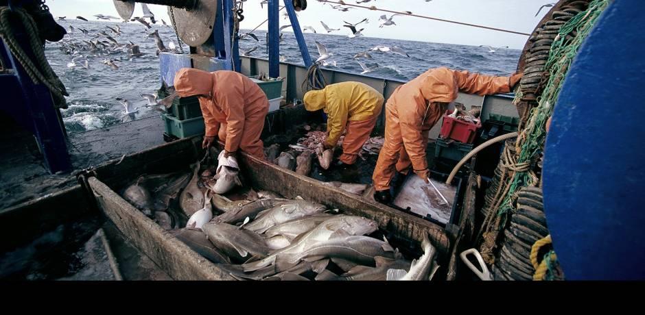 الصيد الساحلي والتقليدي.. استقرار الكميات المفرغة في 2018