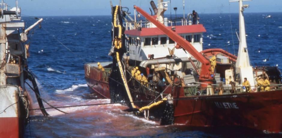 البرلمان الأوروبي يصادق بأغلبية ساحقة على اتفاق الصيد البحري بين المغرب والاتحاد الأوروبي