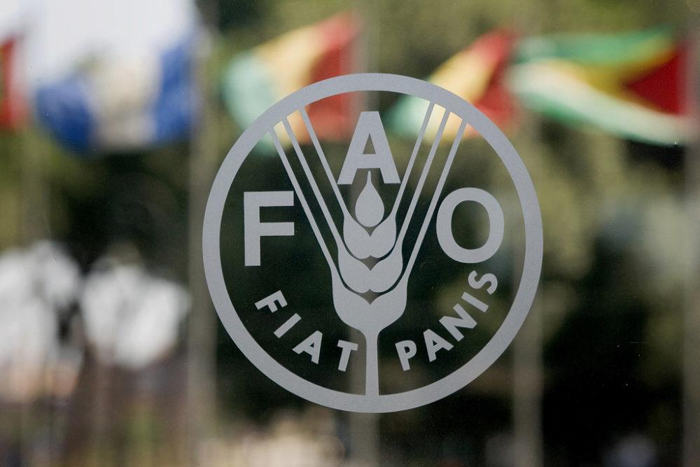 الفاو: ارتفاع مستويات انعدام الأمن الغذائي الحاد بسبب النزاعات المستمرة و الطقس الجاف