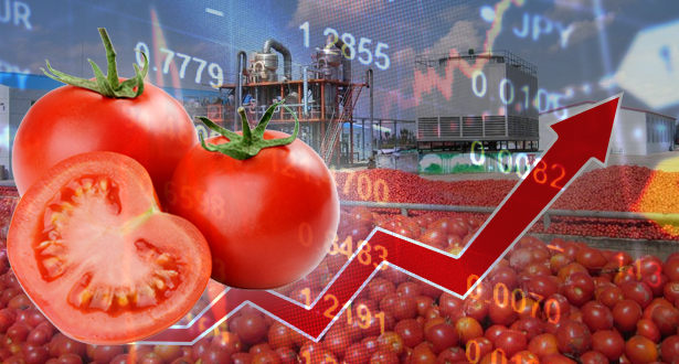 إنتاج الطماطم..المغرب في الرتبة الخامسة عالميا